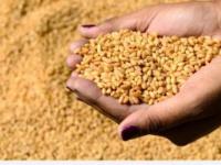 بدعم إماراتي.. السودان يستقبل 68 ألف طن من القمح