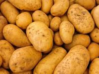 البطاطس تمنع تكوّن الخلايا السرطانية في جسم الإنسان