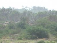 مليشيا الحوثي تباغت أهالي الجبلية بقصف مدفعي