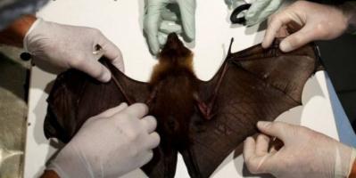 مصدرها الطيور والثدييات.. علماء يحذرون من جيش فيروسات أخطر من كورونا