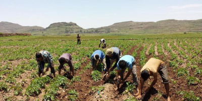 القصف الحوثي على المزارع.. رقعةٌ ينهال عليها إرهاب المليشيات