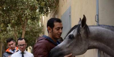 """مصطفى شعبان مع حصانه المفضل """"هيفين"""" في أحدث ظهور له"""