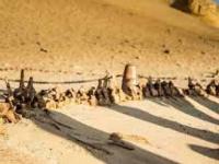 اكتشاف مذهل.. عظام بجعة عمرها 37 مليون سنة بمصر