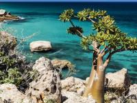 حماية البيئة السقطرية.. الإمارات تحمي الأرخبيل من عبث الشرعية