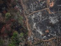 إزالة الغابات في الأمازون بالبرازيل يقفز لأعلى مستوى