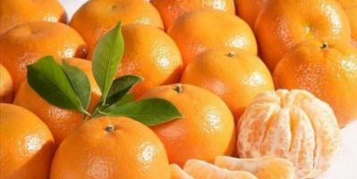 اليوسفي.. فاكهة شتوية لها فوائد عظيمة