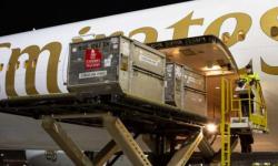 """الإمارات تُحقق نجاحًا كبيرًا في نقل أول شحنة من لقاح """"فايزر بيونتيك"""""""