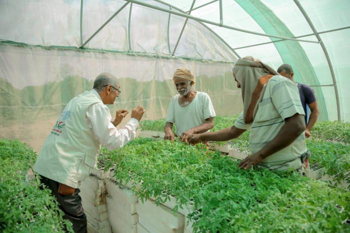 """""""فاو"""" تعتمد تقنيات زراعية جديدة لتكثيف الإنتاج"""