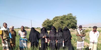 الحقول الإيضاحية تعزز خبرات 500 مزارع بأبين