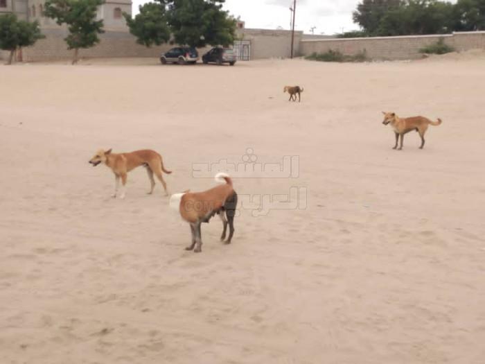 انتشار الكلاب الضالة يثير مخاوف أهالي زنجبار