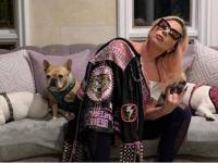 نجمة بوب تعرض مكافأة مالية للعثور على كلبيها