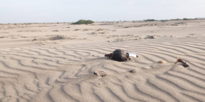 العثور على عدة ألغام أرضية في ساحل أبين