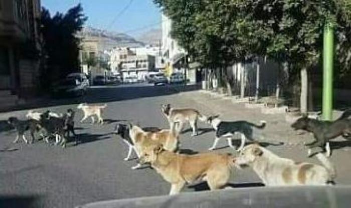 كلب مسعور يعقر 4 أشخاص في المواسط بتعز