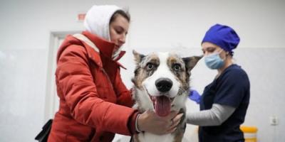 روسيا تُعلن عن إنتاج أول لقاح مخصص للحيوانات