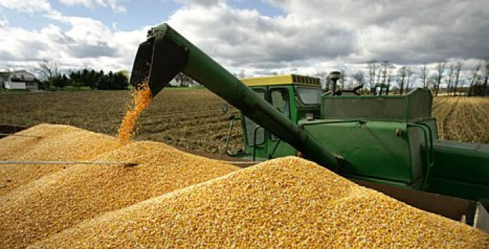 انخفاض صادرات أوكرانيا من الحبوب 24%