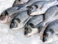 فوائد الأسماك ذات اللحم الأبيض على صحة الإنسان