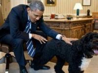 """أوباما يعلن نفوق كلبه """"بو"""""""