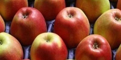 مصدر غني للألياف.. تعرّف على فوائد التفاح