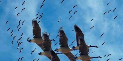 أوغندا تكافح الصيد الجائر بطائرات مراقبة