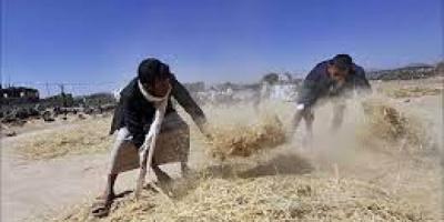 مليشيا الحوثي تصادر المبيدات وتبيعها لحسابها