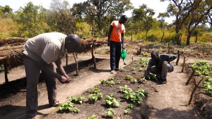 غانا تكافح إزالة الغابات بزراعة 5 ملايين شجرة يوميًا