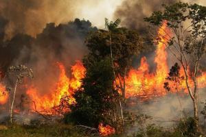 تونس تشهد 122 حريقًا خلال يوم واحد