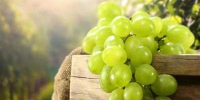 رغم فوائده الكثيرة.. لا تفرط في تناول العنب