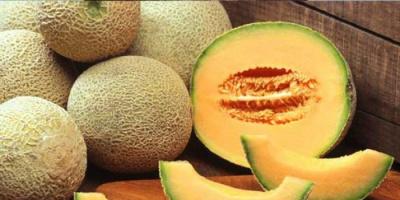 الشمام.. فوائد مذهلة لفاكهة الصيف