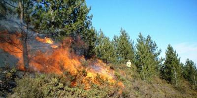 مصرع زوجين إثر حريق بغابة في جنوب إيطاليا
