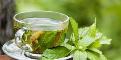 الشاي الأخضر.. يحرق الدهون في جسم الإنسان