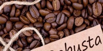 ارتفاع أسعار قهوة روبوستا لأعلى مستوى