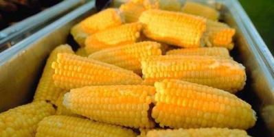 ارتفاع ملحوظ بالواردات المصرية من الذرة