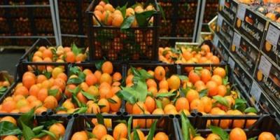 مصر تحتل المركز الأول عالميًا في تصدير البرتقال