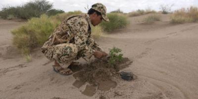 نزع عشرات الألغام الحوثية في حيس